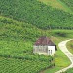 vinos de francia